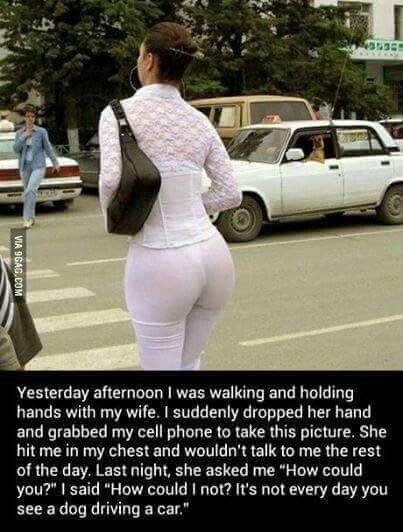 Wat was het eerste dat u zag?  Vast niet die hond die een auto aan het besturen was?