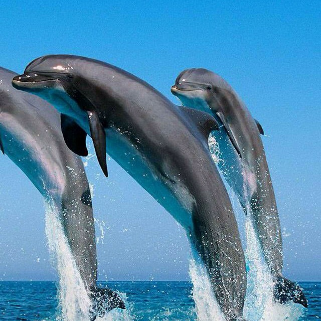high jumping dolphins ...
