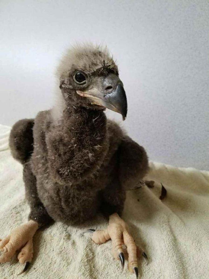 Image result for bold eagle bird