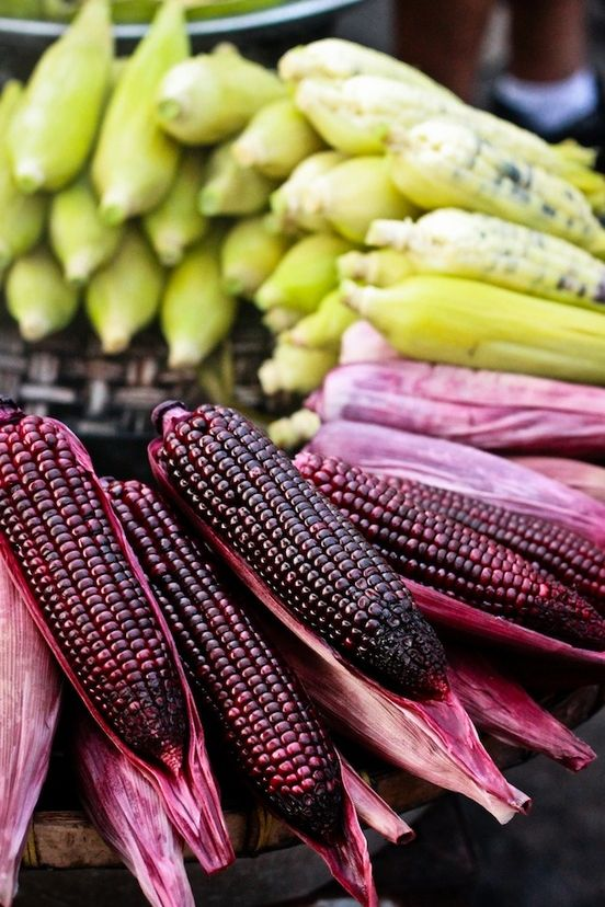Corn represents the races of planet earth: white, yellow, red, brown, black and blue