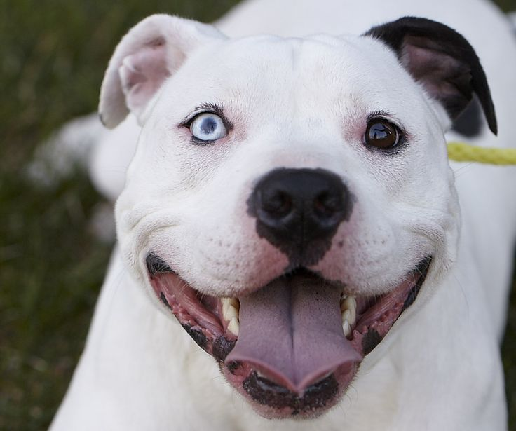 Celebrate responsible pet ownership is key to a good pet, urge your city/county to revise BSL ordinances in to a less discriminatory ordinance punishing the crime, not the breed