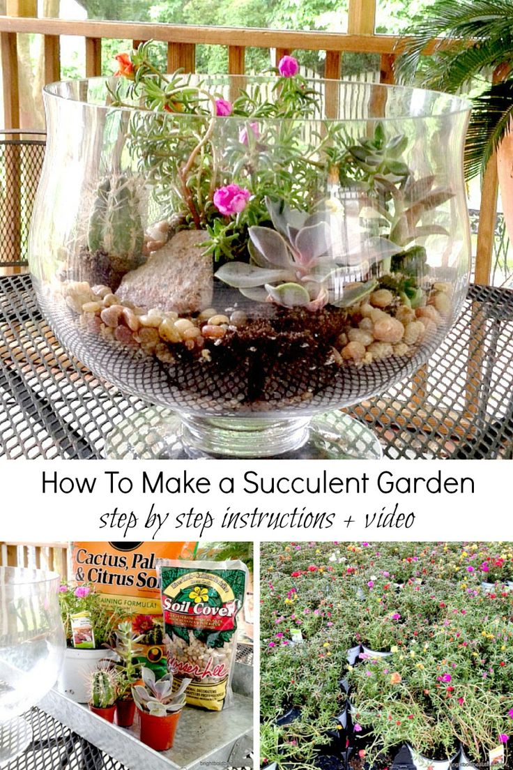 17 Best 1000 images about Fairy Gardens and Terrariums on Pinterest