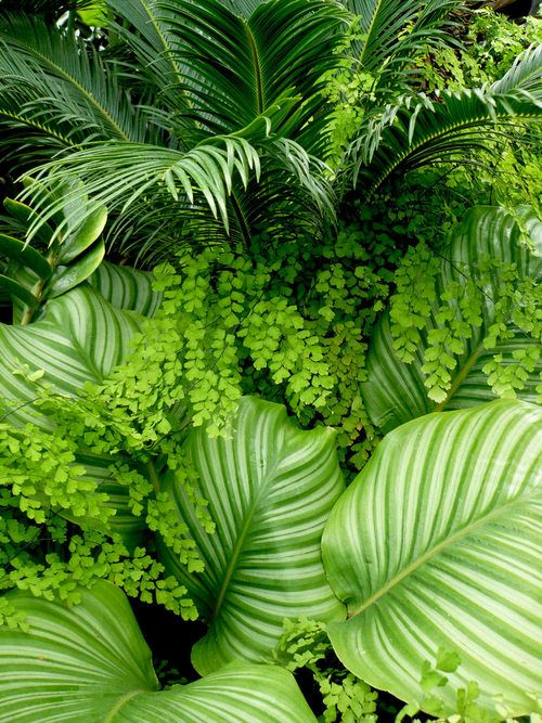 Sago Palm, Ferns and Hostas (.. ferns and hosta are so pretty together....I have what I call wild ferns; the kind that just come up nears wooded areas and they get mixed up in the hosta. I just let a couple of the grown...if they get too big, I pull them out...but they look nice....I just don't want them to overpower the hosta.