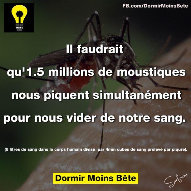 Il faudrait qu'1,5 millions de moustiques nous piquent simultanément pour nous vider de notre sang. ( 06 litres de sang dans le corps humain divise par 4mm cubes de sang prélevé par piqûre).