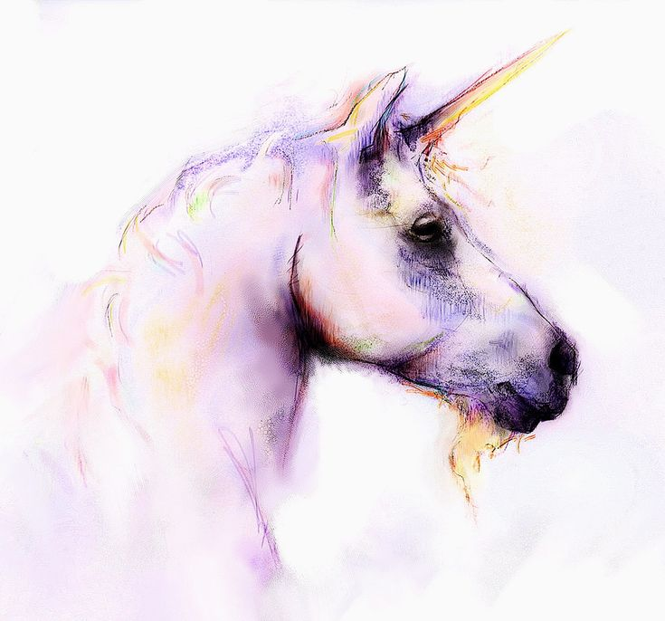 1000 Images About Unicorn On Pinterest The Unicorn