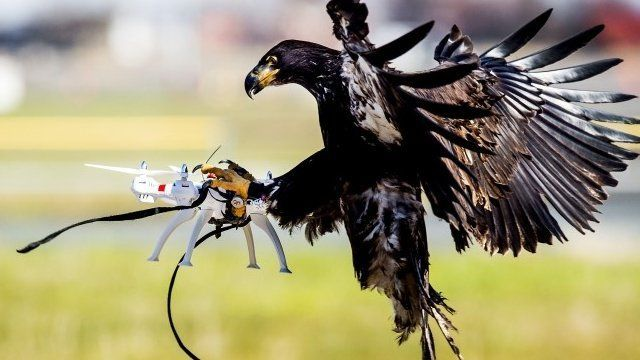 French Air Force and Police employ Drone Hunting Eagles