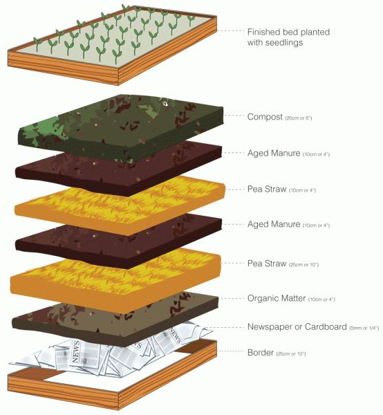 Your veggie garden - Healthy Urban Habitat - 'No dig' garden beds. Elevated garden beds require less bending, planting, weeding, harvesting and watering and are perfect for renters who can take them when they move or great if you have poor soils.