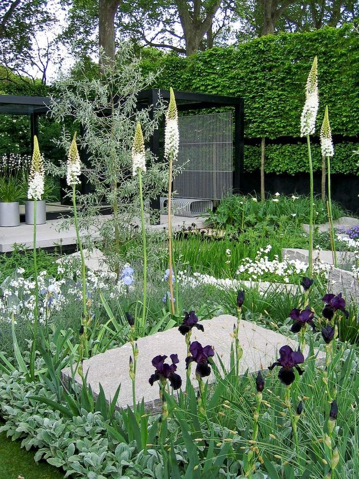 "Chelsea Flower Show 2009, show garden with ao ""black"" irises."