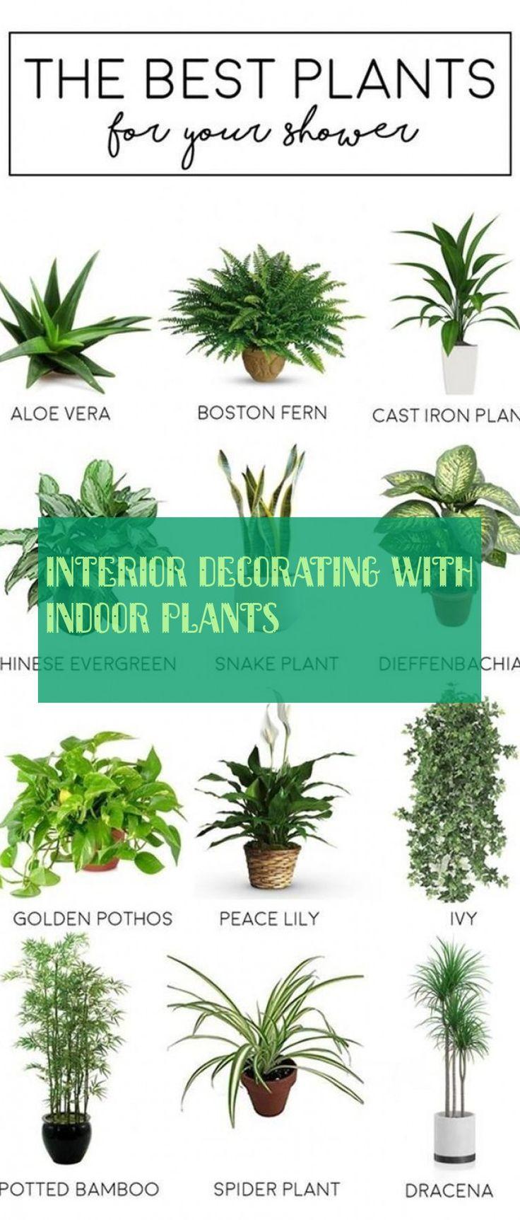 interior decorating with indoor plants, indoor decoration with indoor plants, #i …   – Planting
