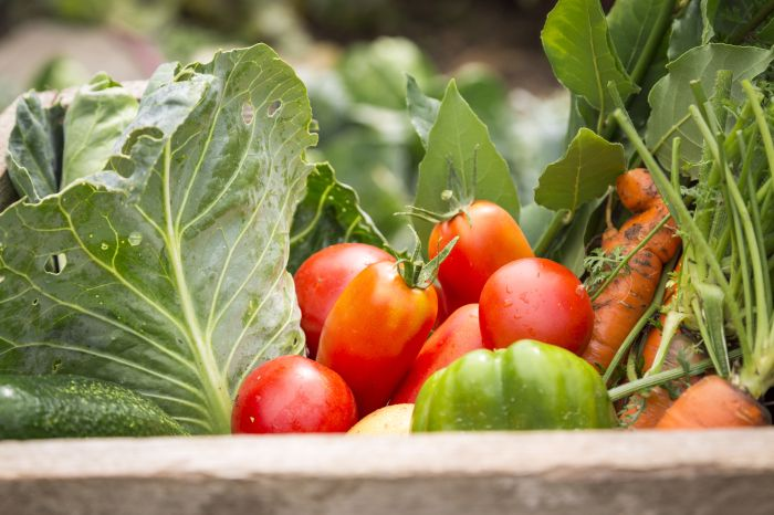 shutterstock_209547556  (Is organic food better for you?)