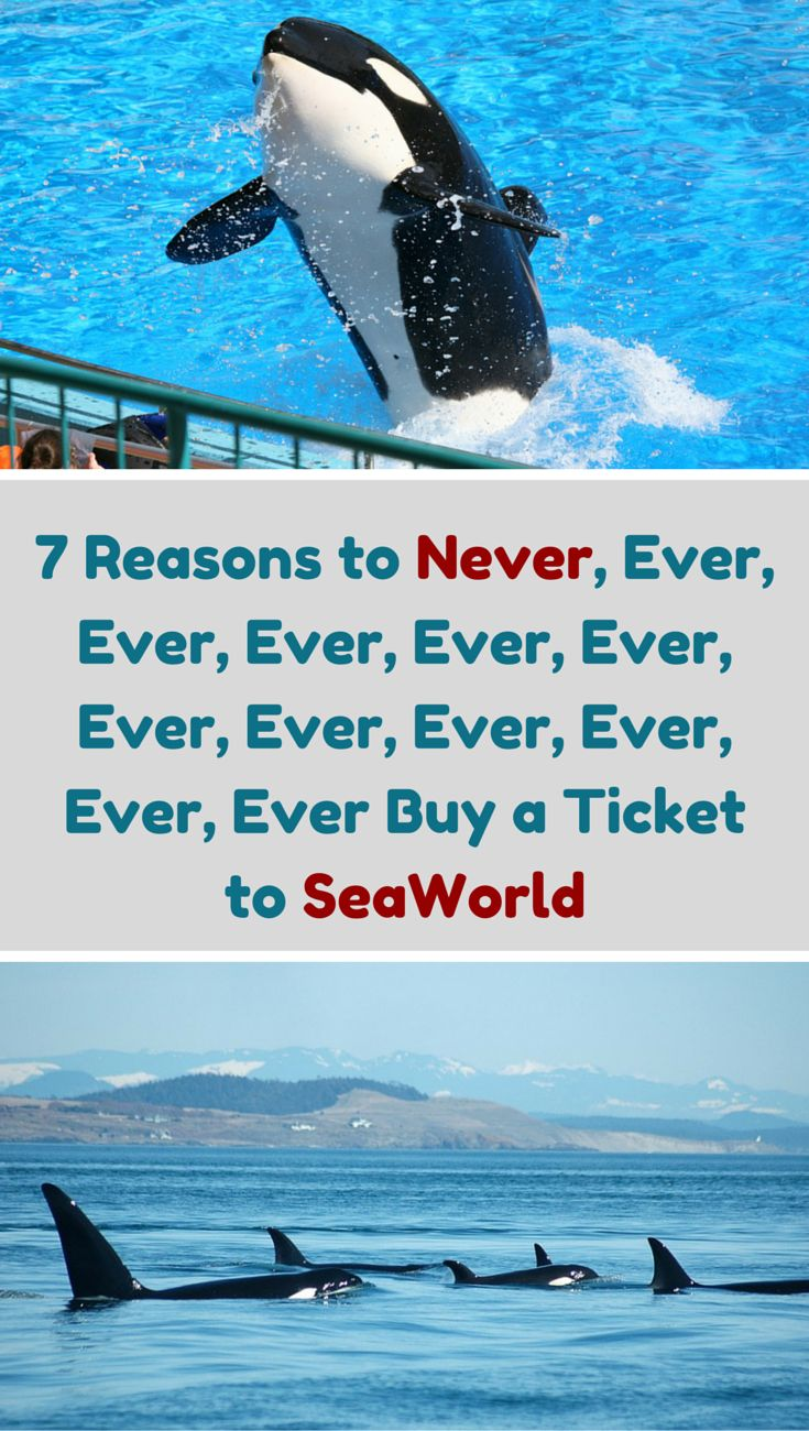 SeaWorld shatters families. Here's why you should never take yours.