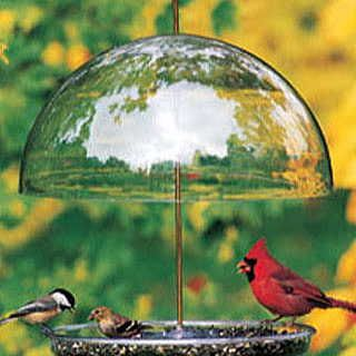 Raise or lower the dome to accommodate whatever type birds you want!