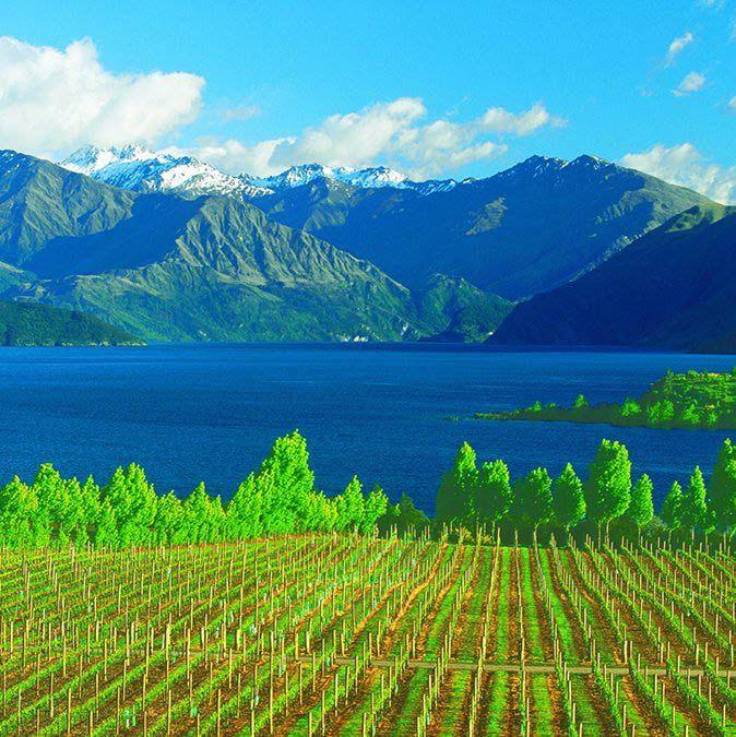 Best Wineries North Island New Zealand