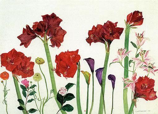 Elizabeth Blackadder Flowers - Amaryllis, Ranunculus and Zantedeschia