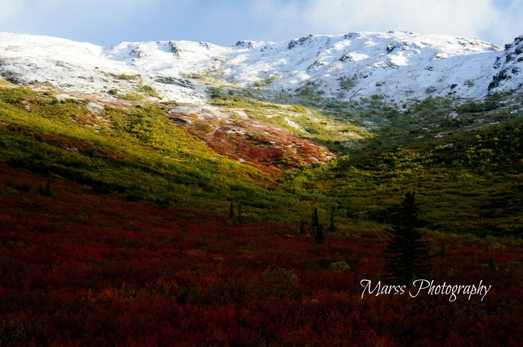 Alaska in the summer taken by Marissa Blott