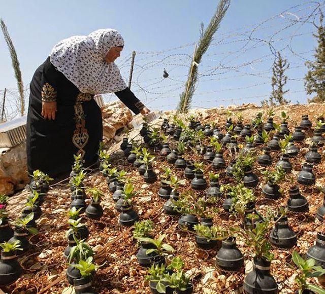 Make❤️Not War  Mujer palestina recoge bombas de gas disparados por el ejército Israelí, y cultiva flores en estas bombas. (Autor desconocido)  #FotografíaPolítica #Guerra #Política #CienciaPolítica #MPRgroup