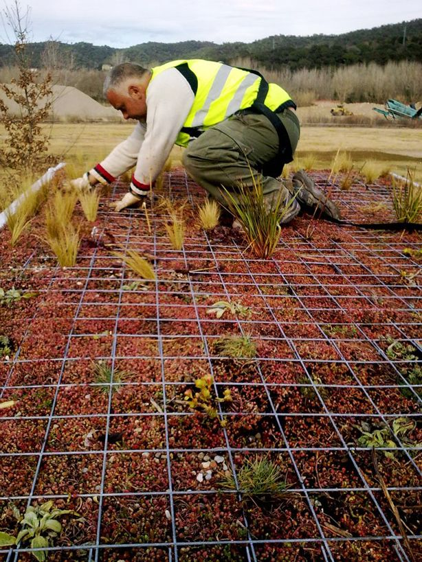 Planting a Phyto Kinetic Green Roof for City Bus #greenroofs #urban #biodiversity #mobilegardens #gardening