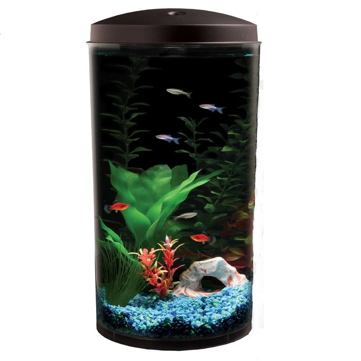 17 best images about small fish tanks on pinterest for 30 gallon fish tank kit