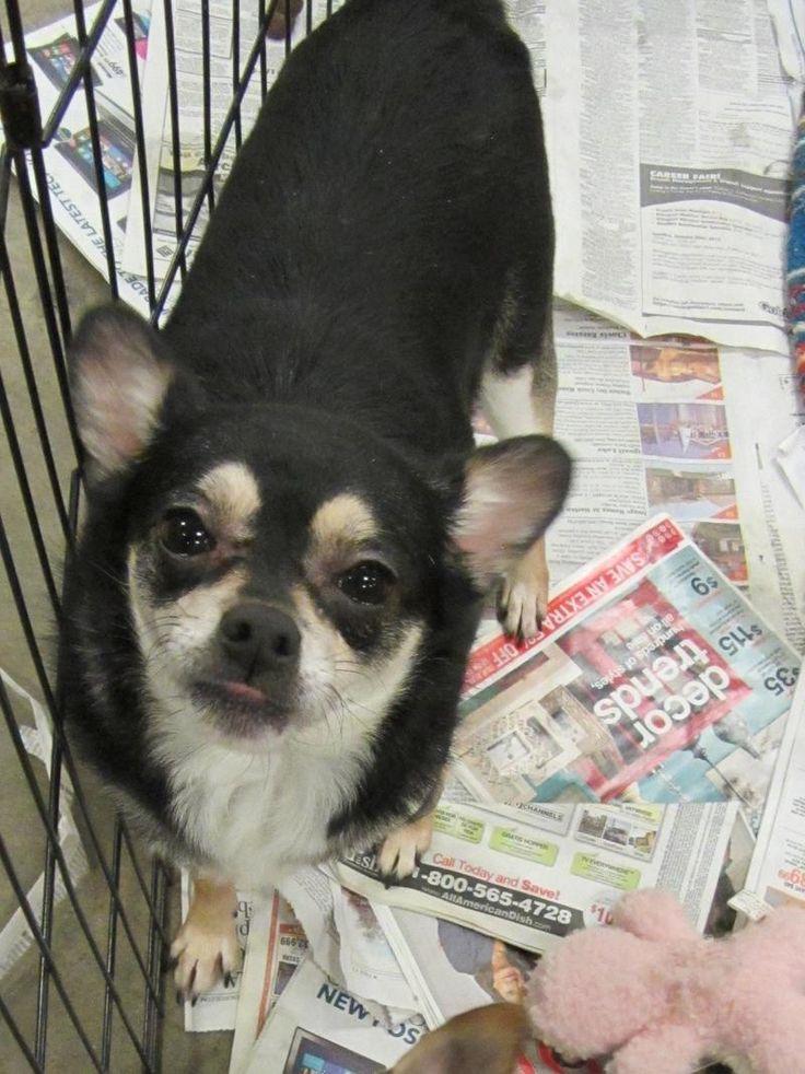 Petsmart Fresno Dog Training
