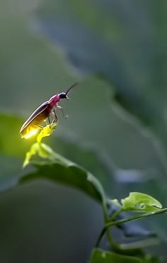 Firefly. I love this photo so much. There is something so peaceful and zen about it. Absolutely beautiful beyond words. <3