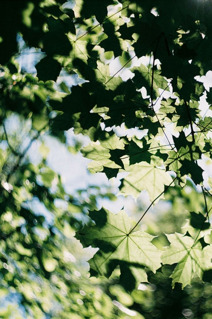 July is gone | film photography | 35mm photography | film.lav