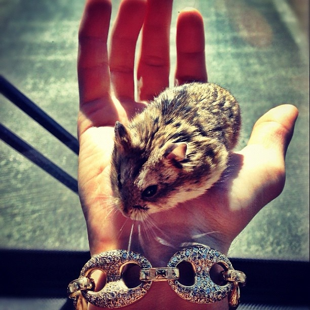 Pin by Marie Hilt on Justin Bieber'♡ Pets, Taylor swift