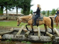 homemade horse trail obstacles - Google Search                                                                                                                                                                                 More