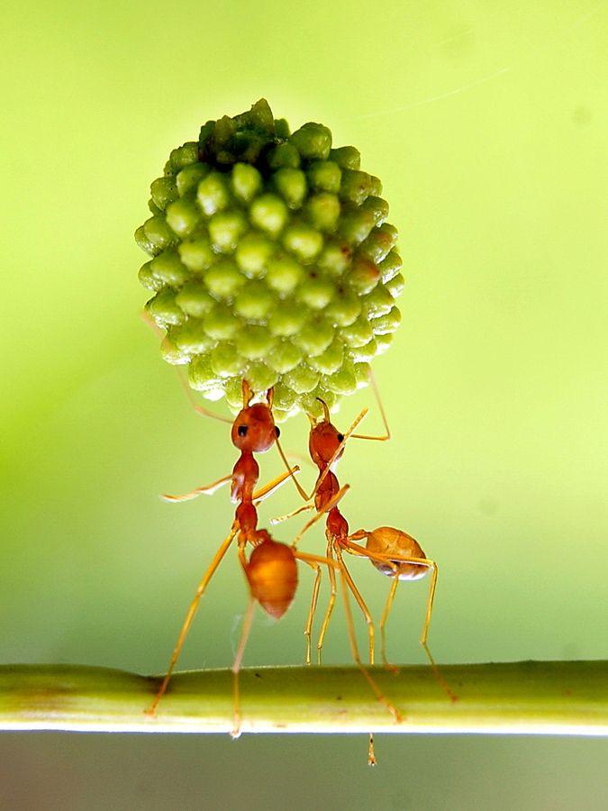Cooperation by Eko Adiyanto | Photography | Pinterest ...