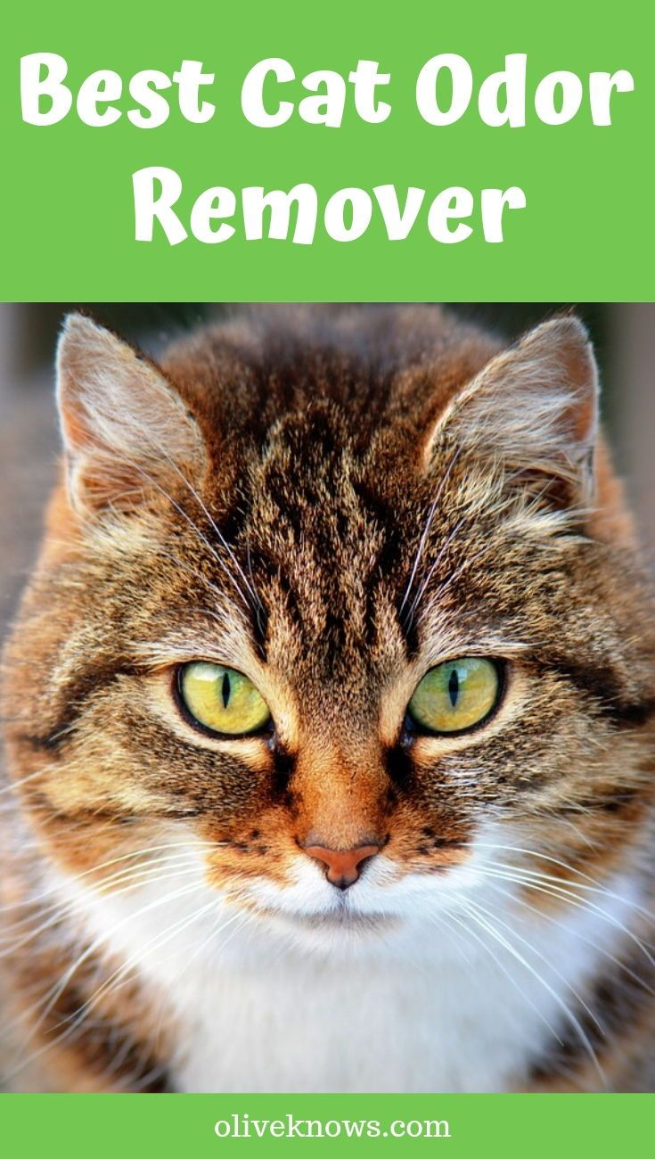 Best Cat Odor Remover Cats, Cool cats, Cats that dont shed
