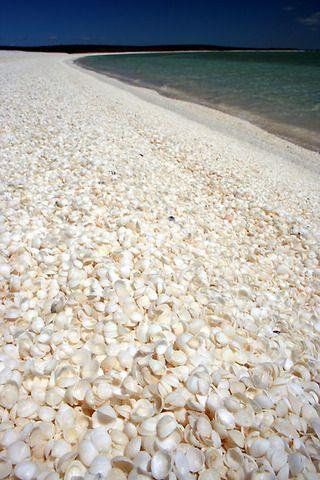 「シェル・ビーチ」 オーストラリア シャーク湾・シェルビーチ
