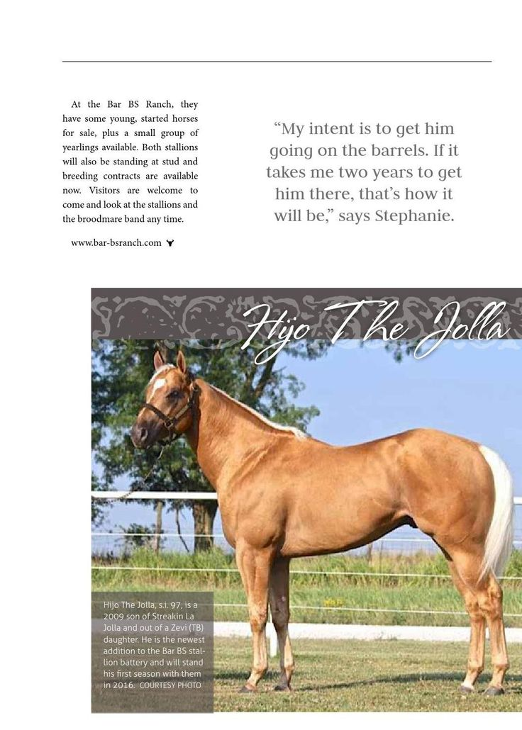 Not Every Horse Breeder Can Produce A  Weanling Colt But