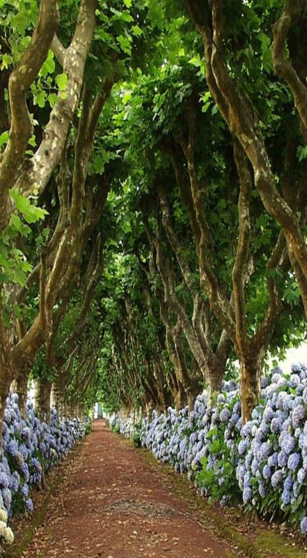 Madeira Island -  the world's largest conterminous laurisilva forest