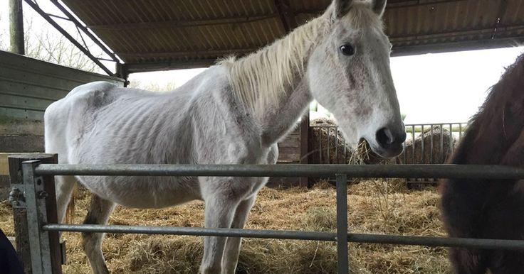 Ägarna övergav hästen i skogen. När hon räddas och hennes hemlighet avslöjas kan ingen hålla tårarna tillbaka.