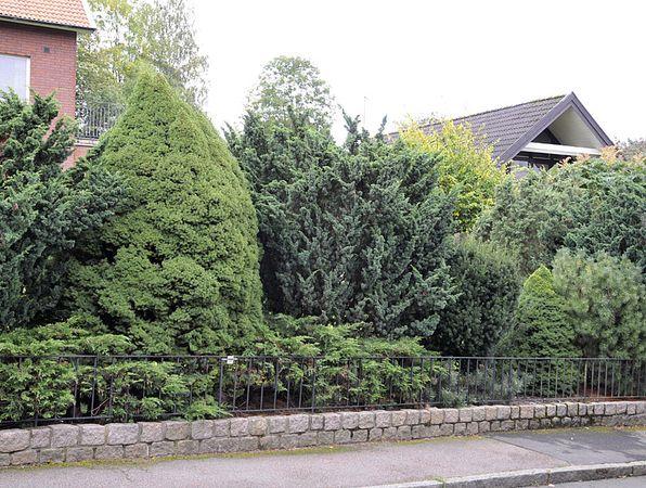 En kombination av mur, lågt staket och olika vintergröna växter. Foto: Bernt Svensson