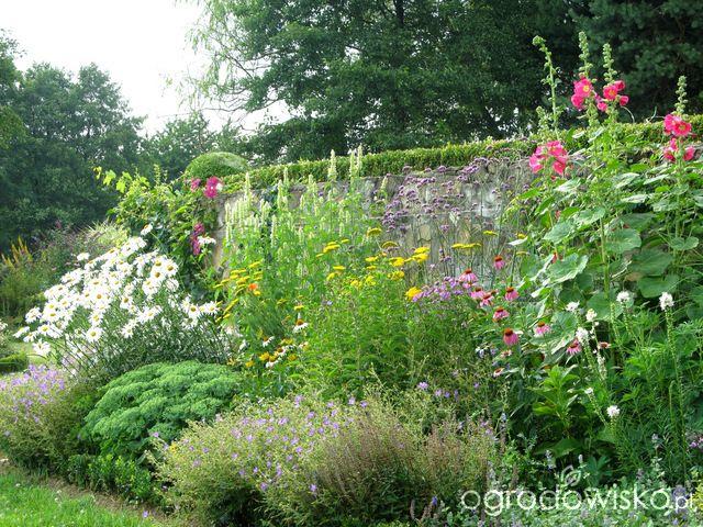 O....! - strona 477 - Forum ogrodnicze - Ogrodowisko