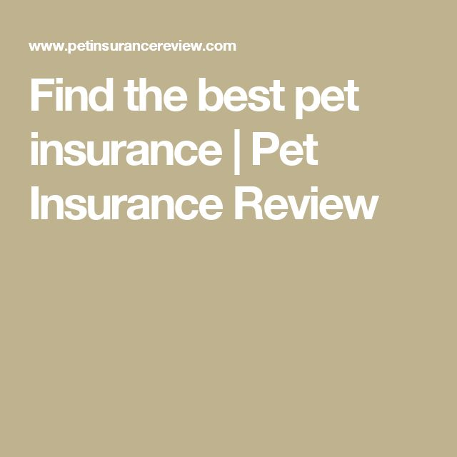 Find the best pet insurance | Pet Insurance Review