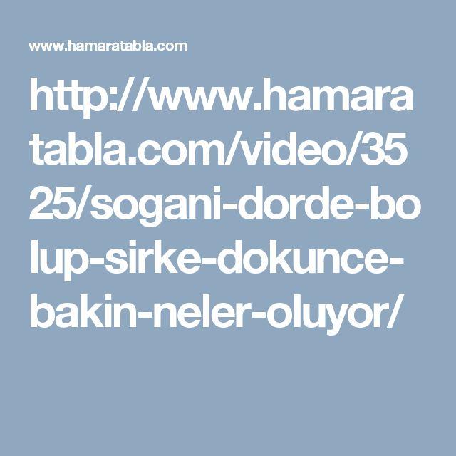 http://www.hamaratabla.com/video/3525/sogani-dorde-bolup-sirke-dokunce-bakin-neler-oluyor/