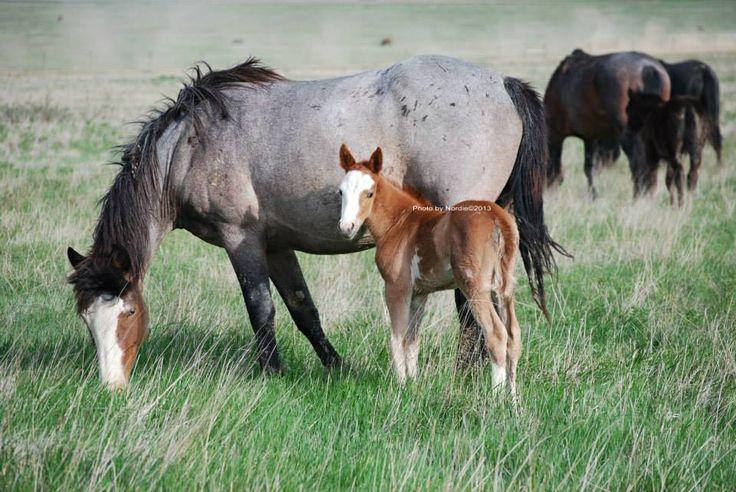 Horse sexually assaulted north dakota photo 79