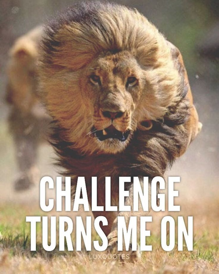 Motivational Quotes With Lion Images: LIKE If You Love A Challenge!