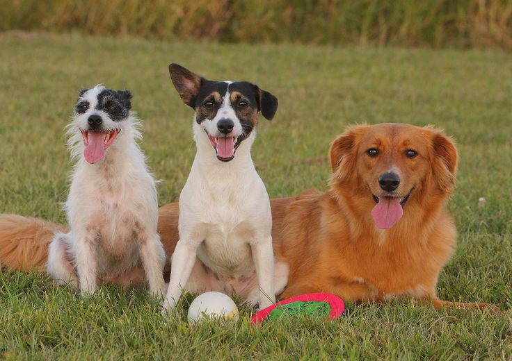 List Of Hybrid Dogs & Their Unusual Mixed-Breed Names | The Dog Guide