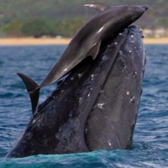 Dolphins and whales playing...