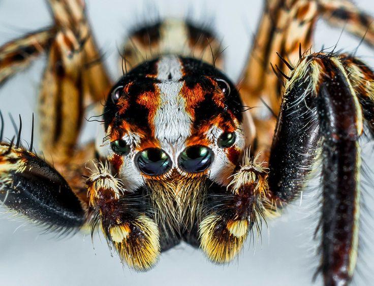 Nechcete mít doma pavouky? Řiďte se našimi pokyny