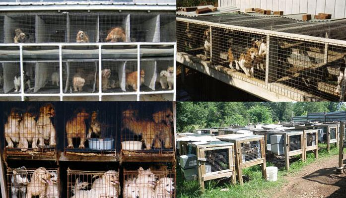 A List of The Worst 101 Puppy Mills in The U.S. (by State) Has Been Released by The Humane Society of the United States We simply CANNOT support an industry that produces unhealthy and tortured dogs! Please, it's crucial that you share this, & DON'T SHOP - ADOPT!!!!   Tips to help stop puppy mills: http://www.caninejournal.com/stopping-puppy-mills-california/  #PuppyMills #AnimalCruelty #DogHealth