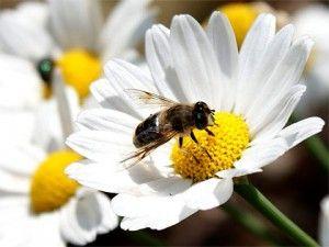 Este domingo en el CIAR, taller de apicultura para niños. Hay que apuntares. http://conpequesenzgz.com/2012/04/talleres-el-mundo-de-las-abejas/