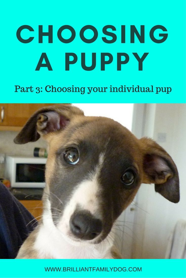 Choosing A Puppy Part 3 Training Your Puppy Aggressive Dog
