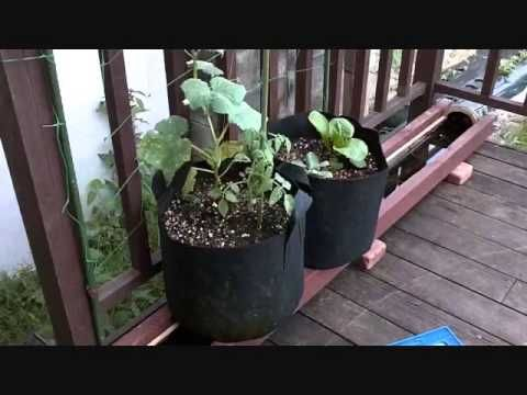 23 Best Gardening Rain Gutter Grow System Images On