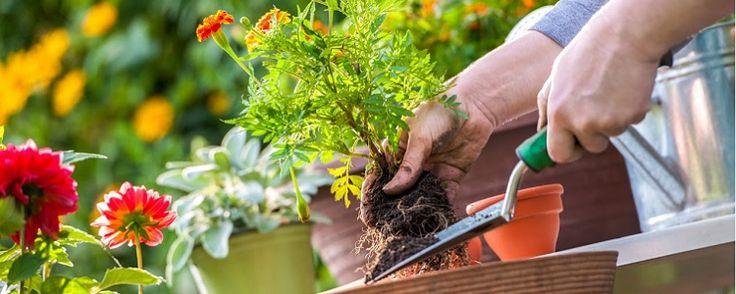 Planejando seu jardim - Jardins de baixa manutenção Todas as plantas e estruturas dojardimrequerem alguma manutenção. No entanto, você pode fazer certas escolhas que definirão se ele demandará muita ou pouca manutenção. Muitas pessoas gostam de trabalhar no seu próprio jardim e intencionalmente escolhem espécies e es... - http://www.ecoadubo.blog.br/ecoblog/2017/10/24/planejando-seu-jardim/