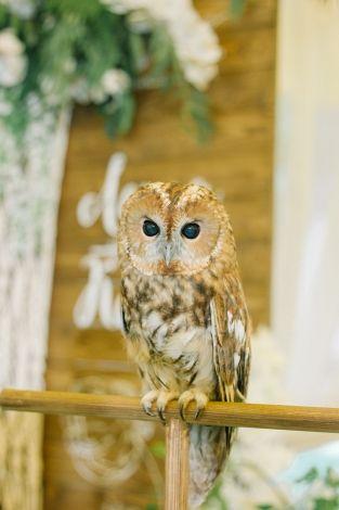 wedding decor, owl, bird, сова, птица, свадебные фотографии