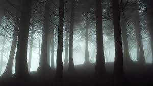 Bilderesultat for skummel skog