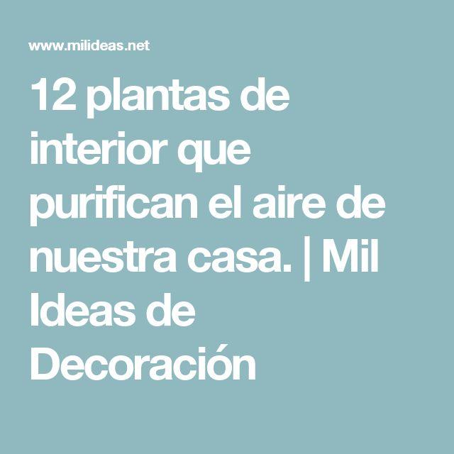 Las 25 mejores ideas sobre plantas que purifican el aire - Plantas de interior que purifican el aire ...